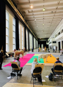 welsh horse shetland pony drawing class