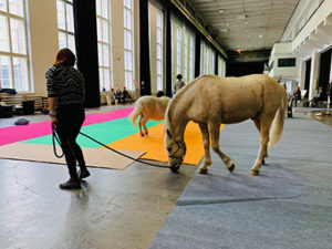 welsh horse shetland pony